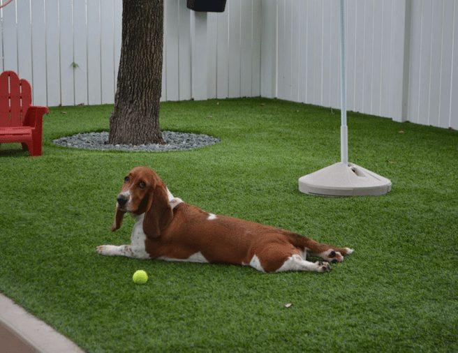 Pet Turf Landscape - Coronado Best Turf, Artificial Grass in San Diego